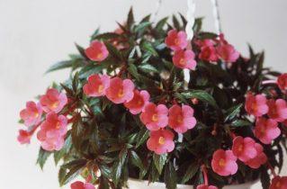 Особливості розміщення кімнатних рослин в інтер'єрі