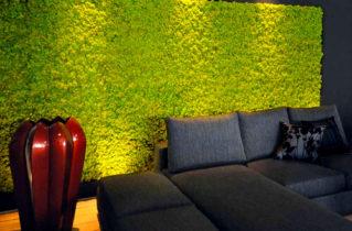 Стабілізований мох: сучасний дизайн